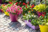 Flower pots - Fine Art prints