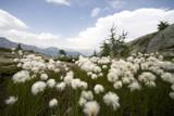 Riserva Naturale del Mont Avic