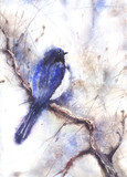 Water color drawing of a bird
