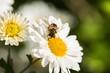 Obrazy na płótnie, fototapety, zdjęcia, fotoobrazy drukowane : Bee, Honey, Honey Bee.