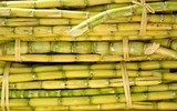 Bundles of Sugar Cane