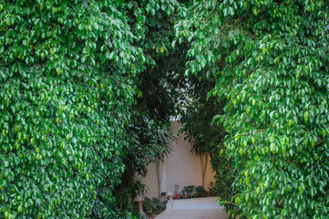 decorative arch with green leaves
