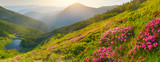 Fototapety Flowers in summer mountains