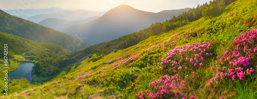 Flowers in summer mountains