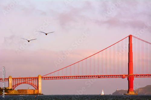 Poster Pelicans fly over the Golden Gate Bridge in San Francisco, CA