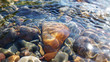 Crystal clear water of small brook in Altai steppe in Chagan-Ouzun place
