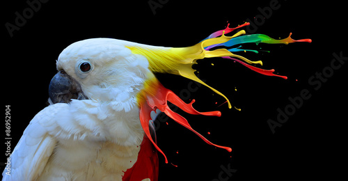 Digital photo manipulation of a white parrot