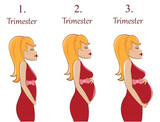 Pregnant woman-first,second and third trimester poster