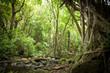 Canopy Filtered Sunlight in Rainforest