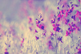 Fototapety purple wild flowers
