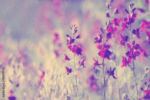 kwiaty-do-sypialni