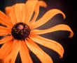 yellow summer flower closeup