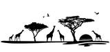 Silhouette Afrika mit Giraffen