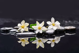 Set of three gardenia with therapy stones  - 87061953