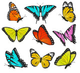 Fototapety Set of colorful butterflies illustration