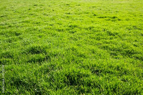 Papiers peints Herbe grass texture