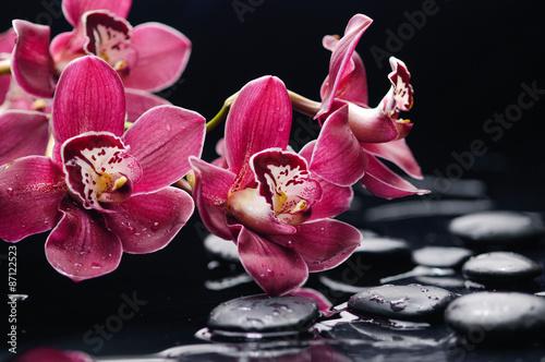 piekna-orchidea-z-terapia-kamieniami