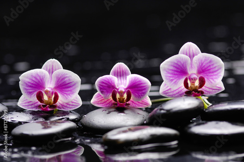 Poster Spa Beautiful three pink orchid and therapy stones
