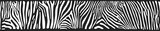 Vector background with zebra skin © honingbij
