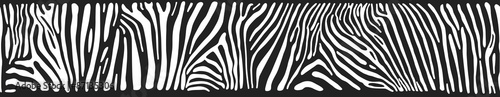Vector background with zebra skin