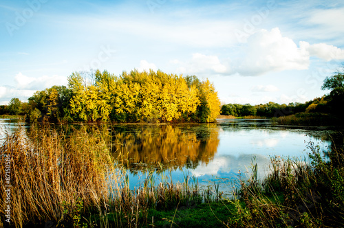 Golden autumn on the pond Poster