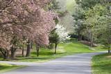 Fototapety Spring Trees in Bloom Beside Driveway