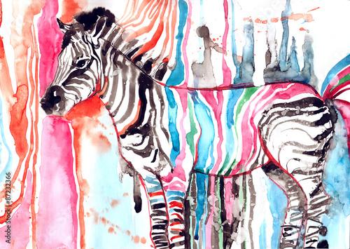 kolorowa-zebra