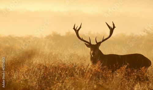 Fotobehang Ree Large red deer silhouette