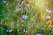 Blue flowers in meadow