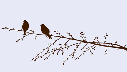 birds on a sprig