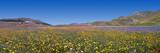 Panoramica  Fioritura 2015  Castelluccio Norcia