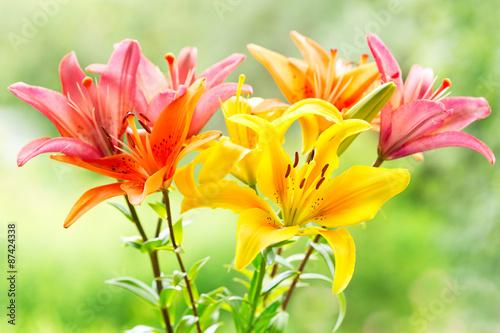 mata magnetyczna bukiet lilii różnych