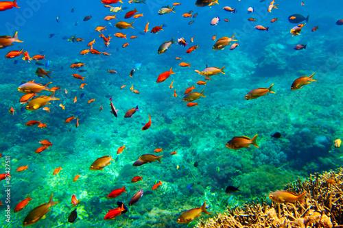 fototapeta na ścianę Underwater landscape