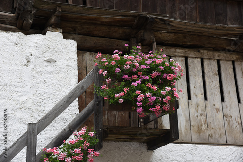 Decorazioni Per Casa Montagna : Fiori fioriere montagna geranio antico decorazione casa buy photos