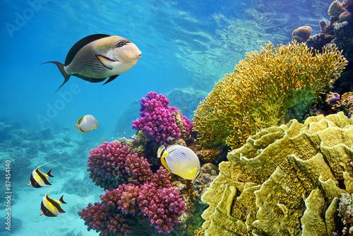 podwodna-scena-z-rafa-koralowa-i-ryba-fotografujaca
