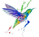 Fototapety hummingbird multicolored on white background