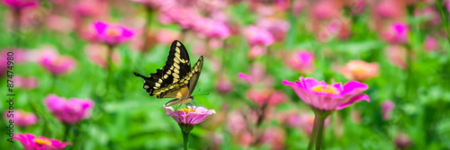 Fotobehang Vlinder Butterfly On A Flower