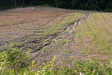 soil erosion on a cultivated field after heavy shower