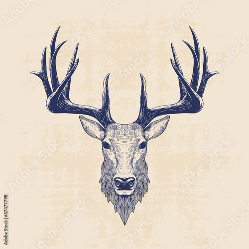 Fototapeta deer head