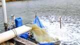 Treated water from ocean being filled into aquaculture fish farm pond  poster