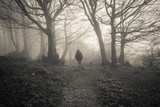 Dispersa nel bosco tra la nebbia