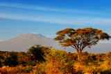 Beautiful Kilimanjaro mountain after sunrise in morning, Kenya,Amboseli national park, Africa