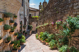 Floral wall in Spello, Umbria