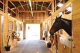 Horses at the stables  - 87573169