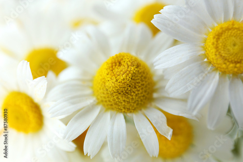 Beautiful bouquet of daisies close up © Africa Studio