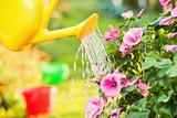 Fototapety Watering flowers in garden