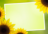 Sunflower vector background for image and text - 87598739