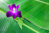 violate orchid on green banana leaf poster