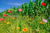 Blumenwiese - leuchtende Ringelblumen, Froschperspektive