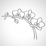 Fototapety Sketch orchid branch
